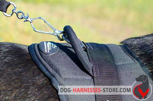 Solid D-ring to attach a leash