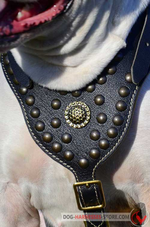 Studded Leather Dog Harness Comfortable to Wear