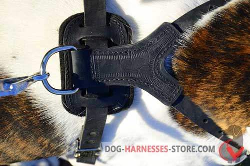 Dog leather harness with nickel D-ring