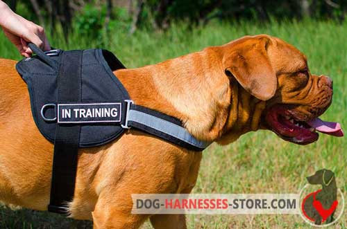 All weather nylon harness for Dogue De Bordeaux
