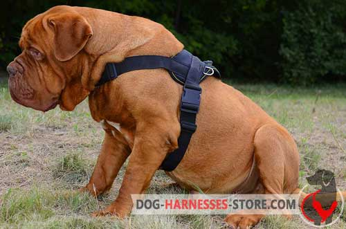 Nylon Dogue de Bordeaux Harness Easy to Adjust