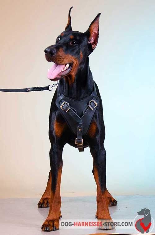 Doberman Harness Easy to Adjust