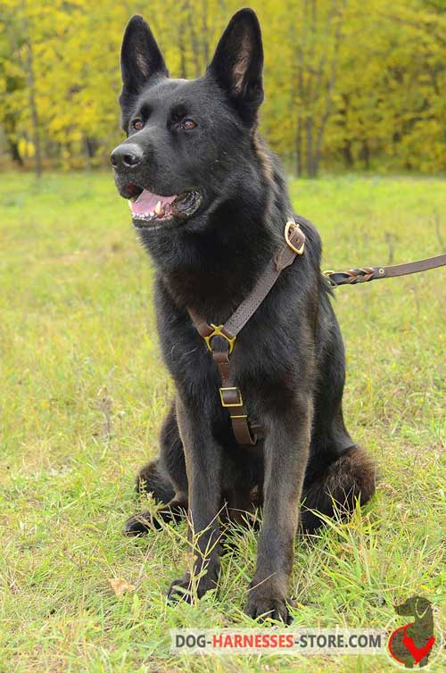 Harness for German Shepherd Easy to Adjust