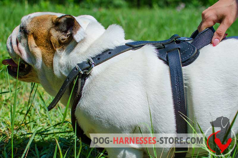 Padded Dog Pulling Harness - Leather Dog Harness H8 [H8###1092 ...