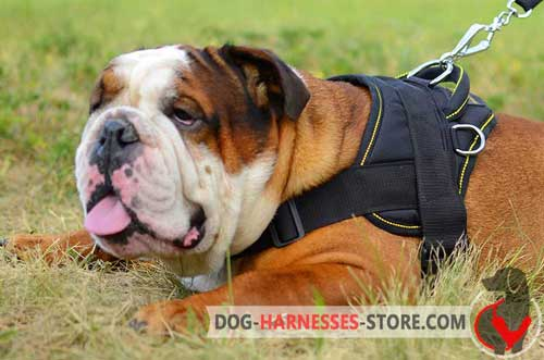 Pulling English Bulldog Harness with Side D-Rings