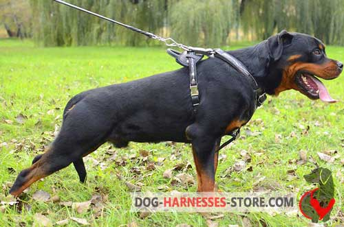 Strong Protective Leather Rottweiler Harness