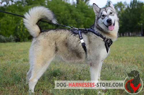 Hand Painted Alaskan Malamute Harness Made of Genuine Leather
