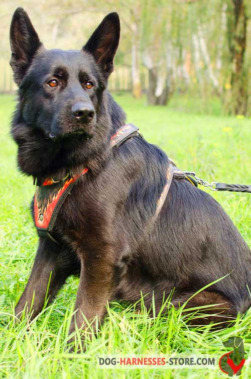 Dependable Leather German Shepherd Harness for Training