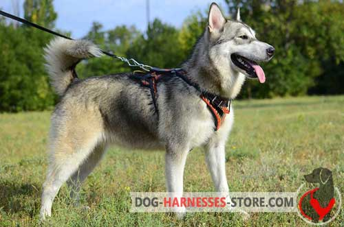 Hand Painted Alaskan Malamute Harness Made of Leather