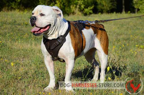 American Bulldog Leather Dog Harness Padded Chest Plate