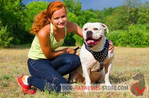 Stylish     American Bulldog harness for walking