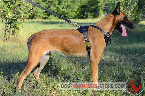 Leather Belgian Malinois harness for daily use