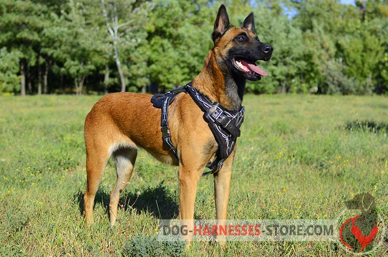 Leather Belgian Malinois Harness Painted with Barbed Wire BIG leather hand painted amstaff harness [h1bw 1092 leather dog wire dog harness at bayanpartner.co