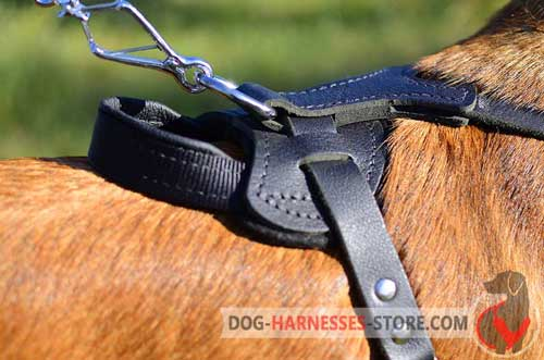 Leather Belgian Malinois Harness with D-Ring