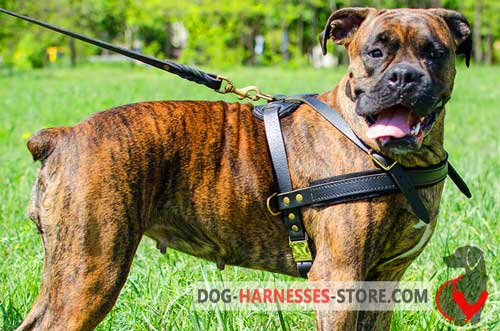 Leather Boxer Harness for Pulling