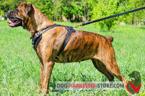 Comfortable Leather Harness for Boxer