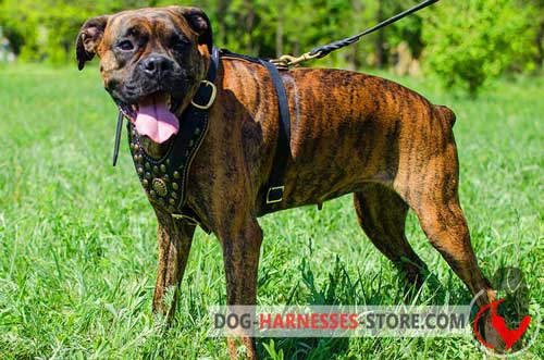 Designer Boxer harness easy to adjust