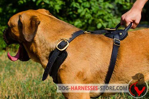 Padded Cane Corso Harness