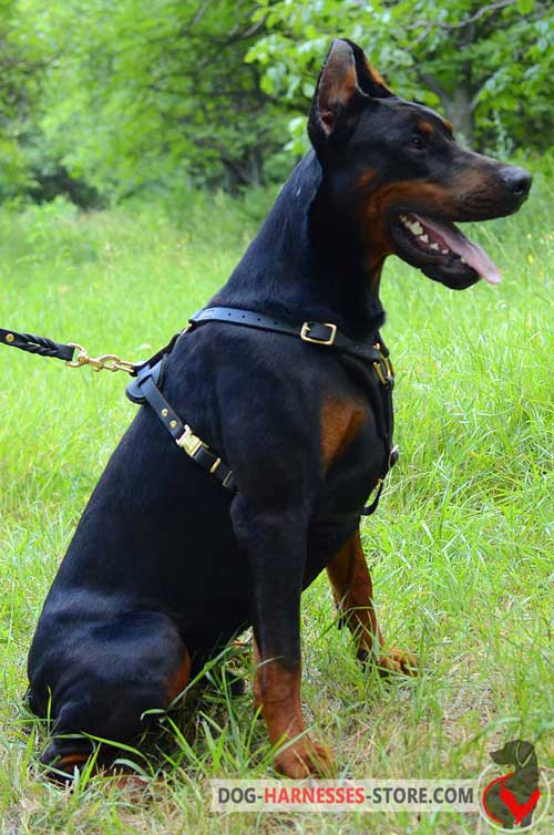 Leather Doberman Harness With Quick Release Buckle