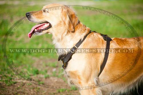 Comfortable Leather Dog Harness Suitable For Tracking