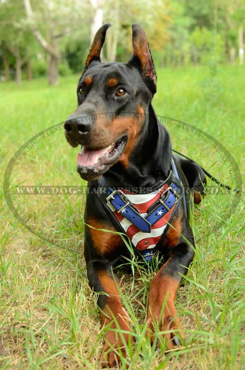 Unique Leather Dog Harness Decorated With American  Symbolics