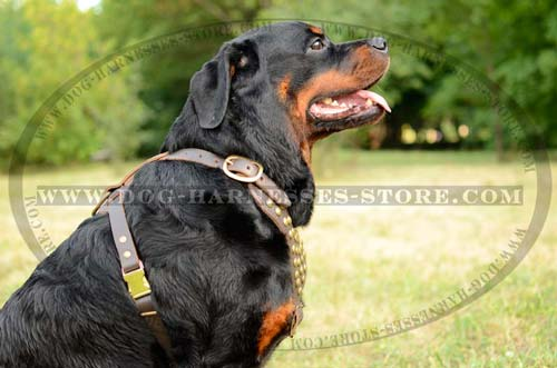 Studded Leather Dog Harness For Moving Freely