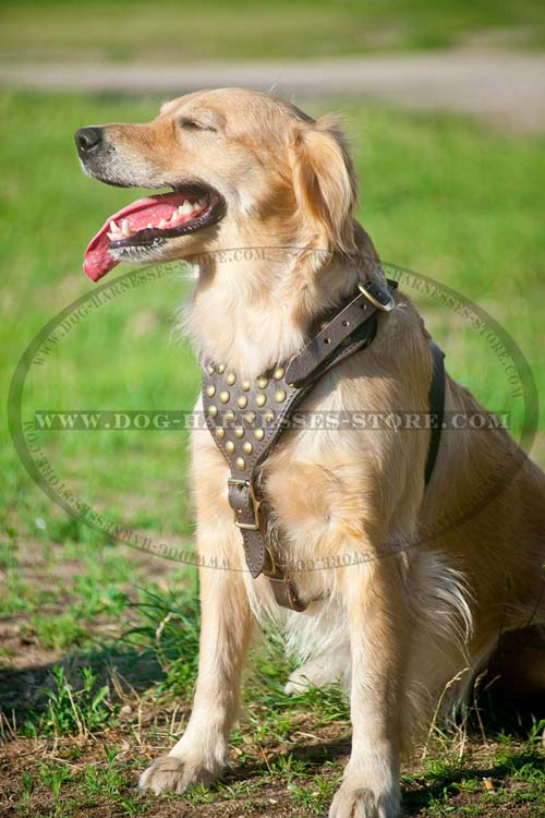 Special Design Leather Dog Harness With Brass Studs