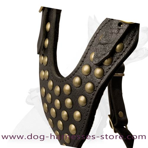 Y-Shape Leather Dog Harness With Brass Studs