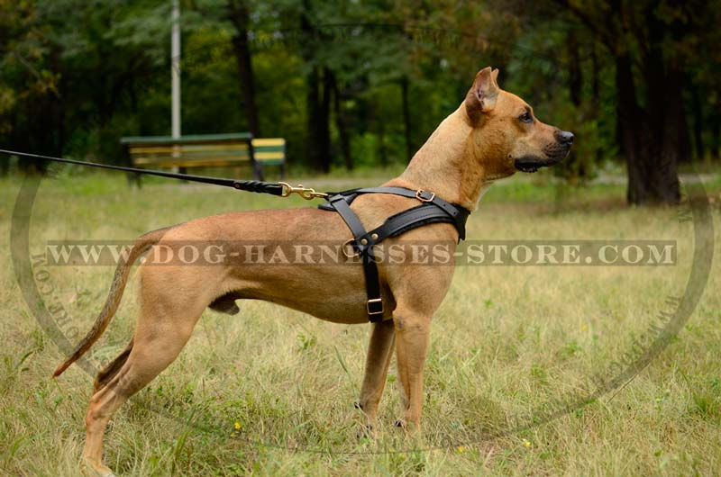 Pulling/Tracking Leather Dog Harness for All Breeds [H5###1092 ...