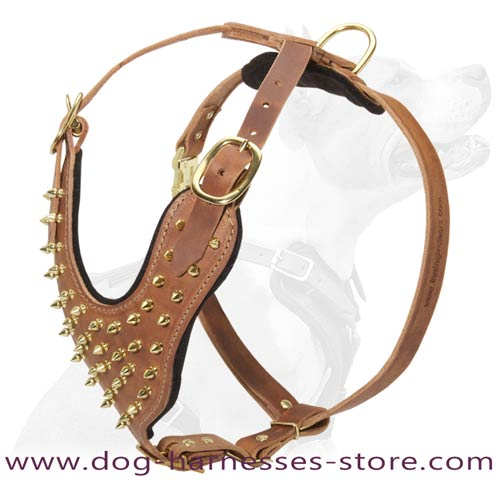 Stylish Leather Dog Harness Decorated With Brass  Spikes