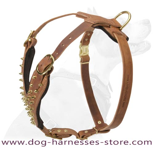 Exclusive Design Brass Spiked Leather Dog Harness