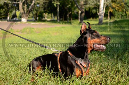 Comfortable Painted Leather Doberman Harness