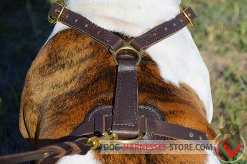 Extra Strong Brass Ring on Dog Harness Back Plate