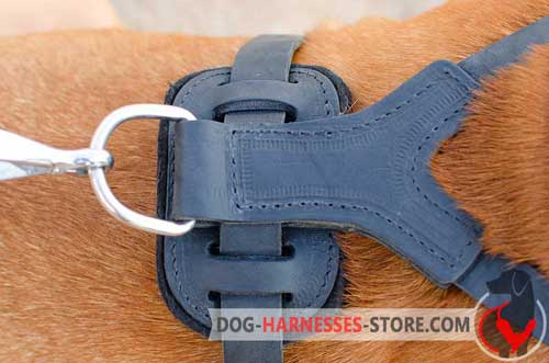 Reliable leather dog harness with nickel D-ring
