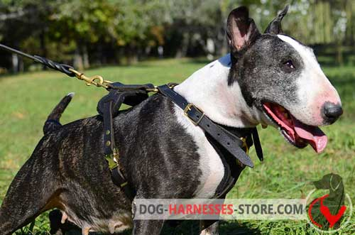 Extra strong English Bull Terrier harness for pulling/tracking