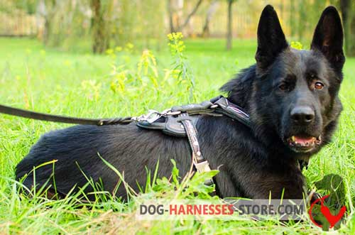 German Shepherd Harness Painted with Barbed Wire