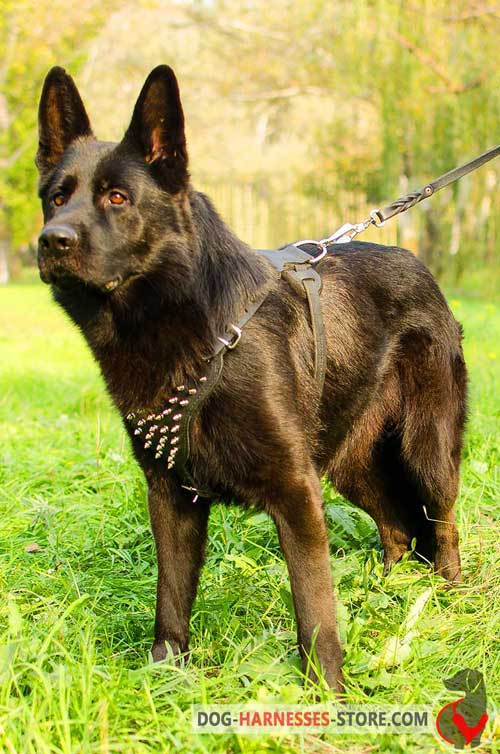 Leather German Shepherd Harness with Spikes for Walking