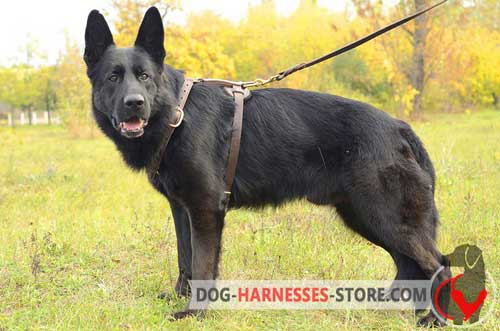 Comfortable German Shepherd harness for walking