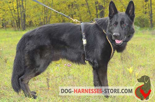 German Shepherd harness with quick release buckle