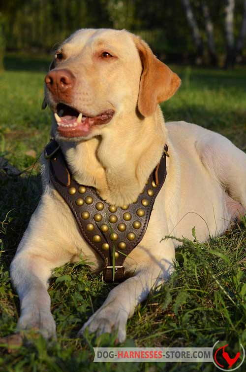 Obedience Training Leather Labrador Retriever Harness