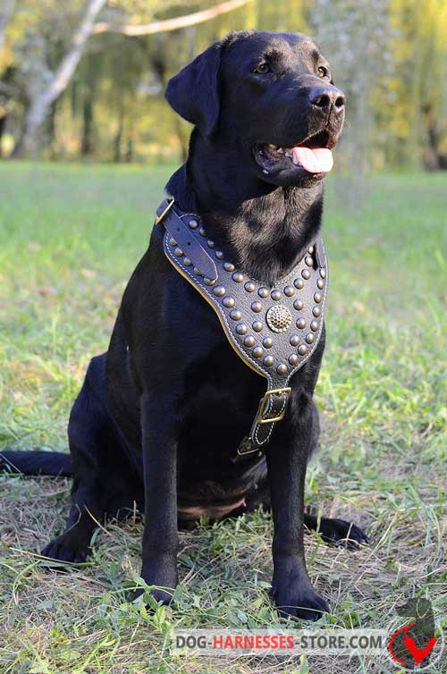 4 Ways Adjustable Labrador Retriever Harness