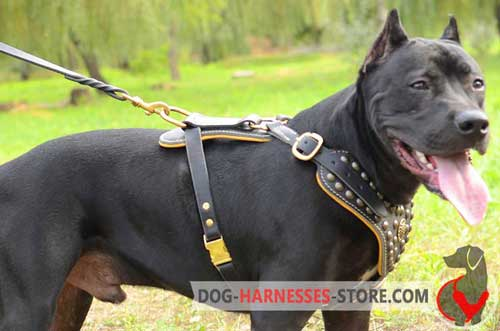 Leather Pitbull harness with soft inside Nappa padding