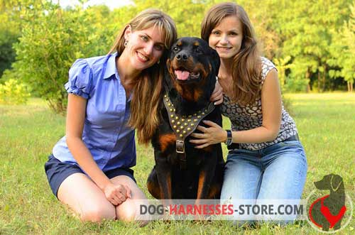 Leather Rottweiler harness with soft protective plate