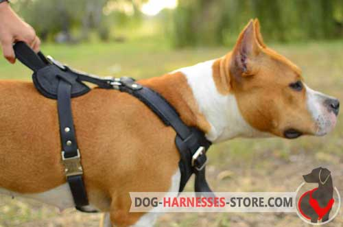 Leather Staffordshire Bull Terrier Harness with Chest Plate