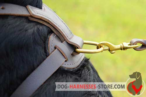 Rust-    proofleather dog harness