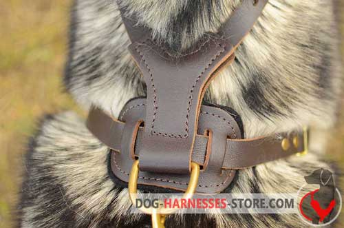 Stainless leather dog harness