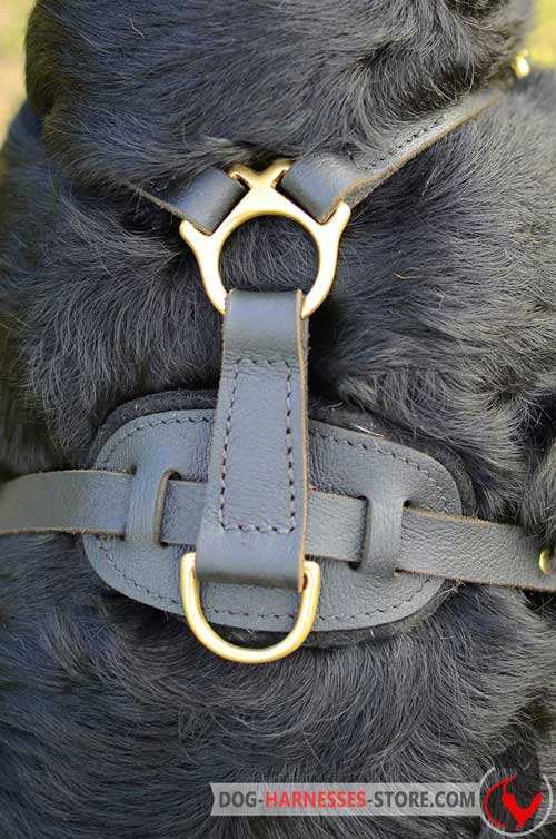 Leather dog harness with D-ring for the leash