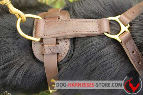 Brass D-ring for leather dog harness
