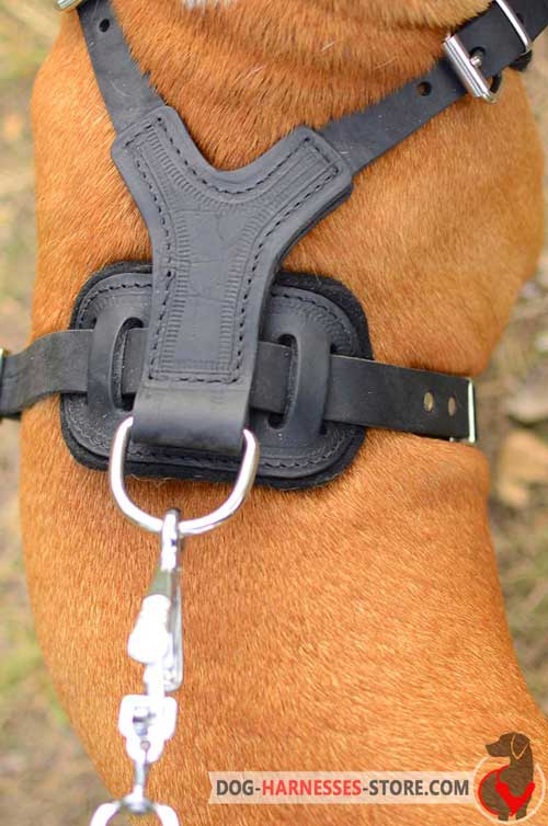 Leather dog harness with nickel fittings
