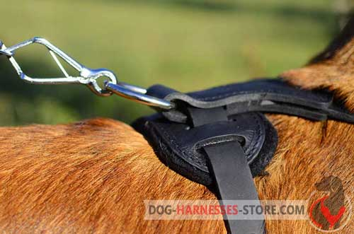 D-ring for leash attachment